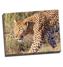 Image of Photos on Canvas 32 x 24 Gallery Wrap Canvas