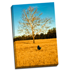 Image of Photos on Canvas 40 x 60 Gallery Wrap Canvas