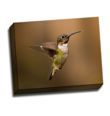 Image of Canvas Print 14 x 11 Gallery Wrap