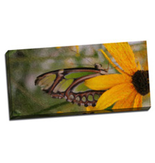 Image of Photos on Canvas 38 x 18 Gallery Wrap Canvas