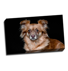 Image of Photos on Canvas 20 x 12 Gallery Wrap Canvas