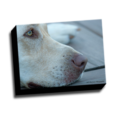 Image of Canvas Print 12 x 9 Gallery Wrap