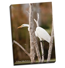 Image of Photos on Canvas 24 x 35 Gallery Wrap Canvas