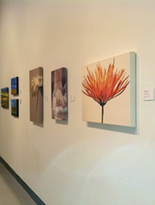 Gallery canvases by Tara Funk